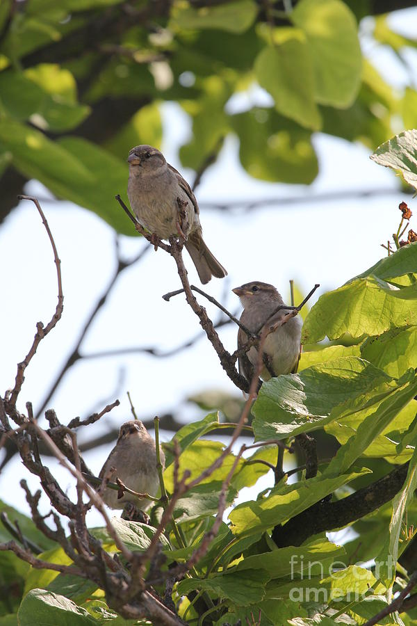 Lindenhurst Photograph - Baby Sparrows by Scenesational Photos