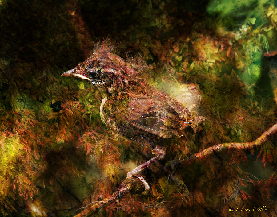 Walker Digital Art - Baby Wren First Fly by J Larry Walker