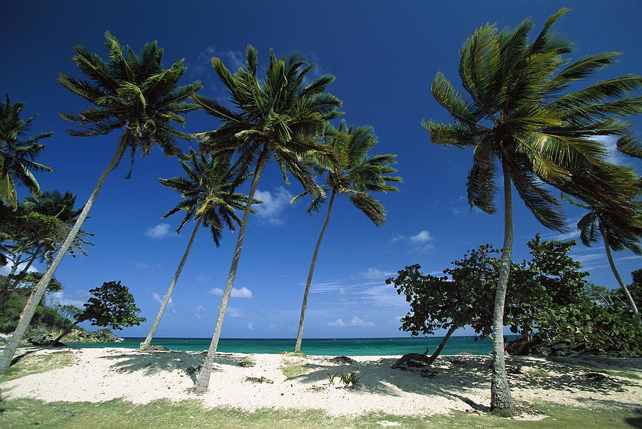 Bacardi Beach, Cayo Levantado Photograph by Konrad Wothe