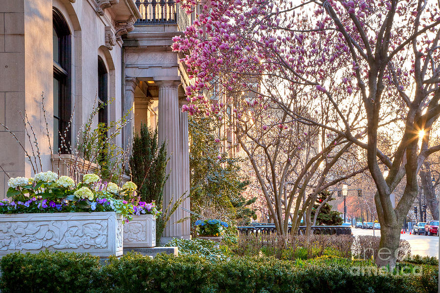 April Photograph - Back Bay Spring by Susan Cole Kelly