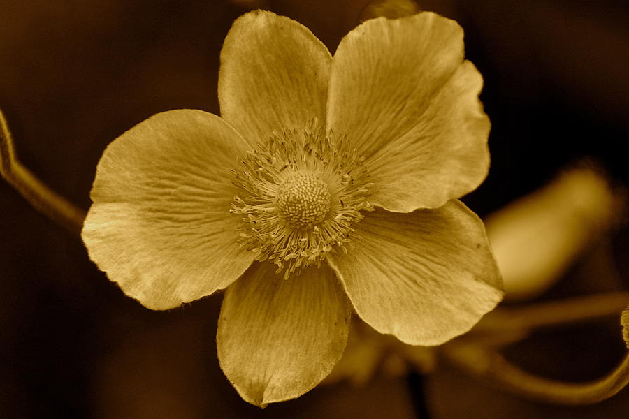 Flower Photograph - Back In Time by Karen Grist