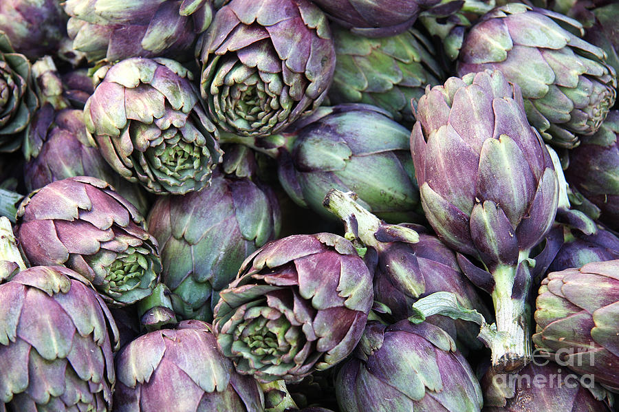 Agriculture Photograph - Background Of Artichokes by Jane Rix