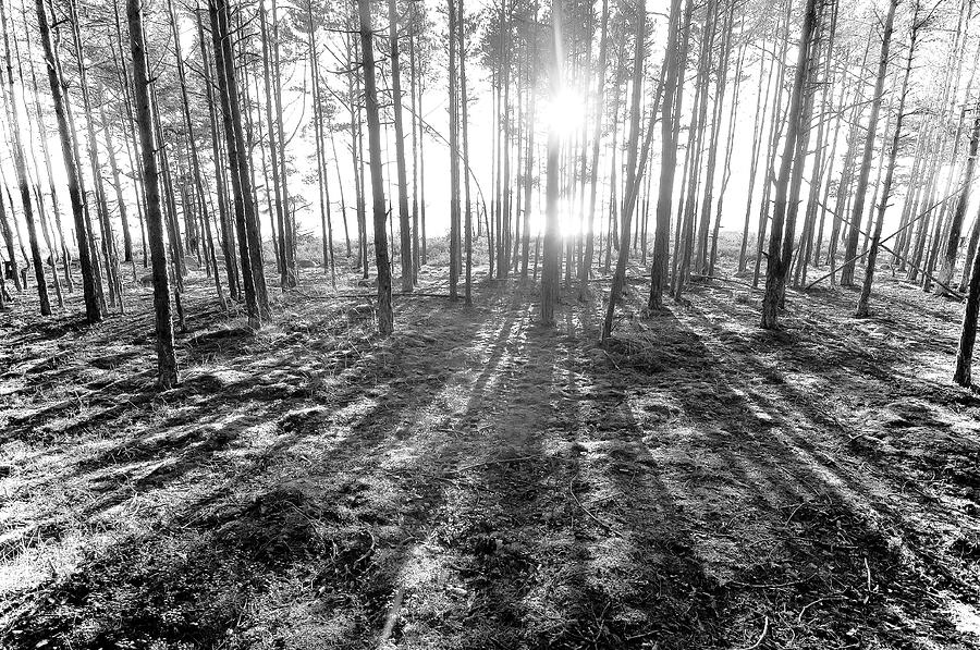 Backlight Photograph by Micael  Carlsson