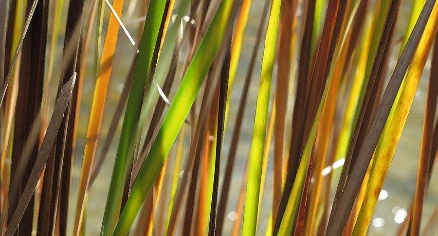 Grass Photograph - Backlit Grass Wc 2  by Lyle Crump