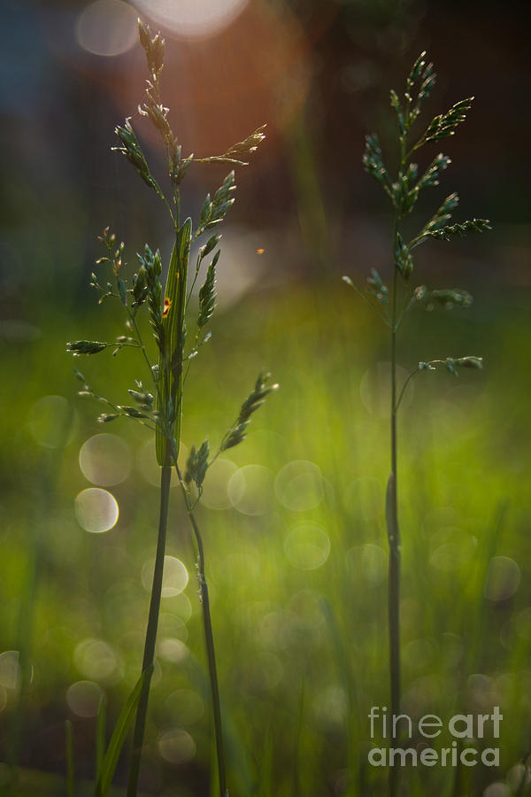 Overgrown Photograph - Backyard by Sue OConnor