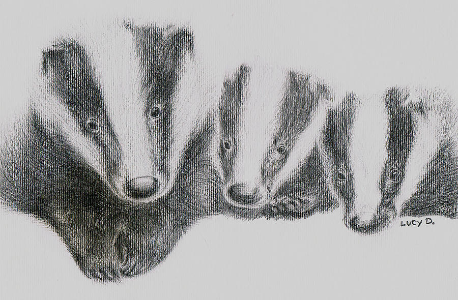Badgers Drawing - Badgers by Lucy D