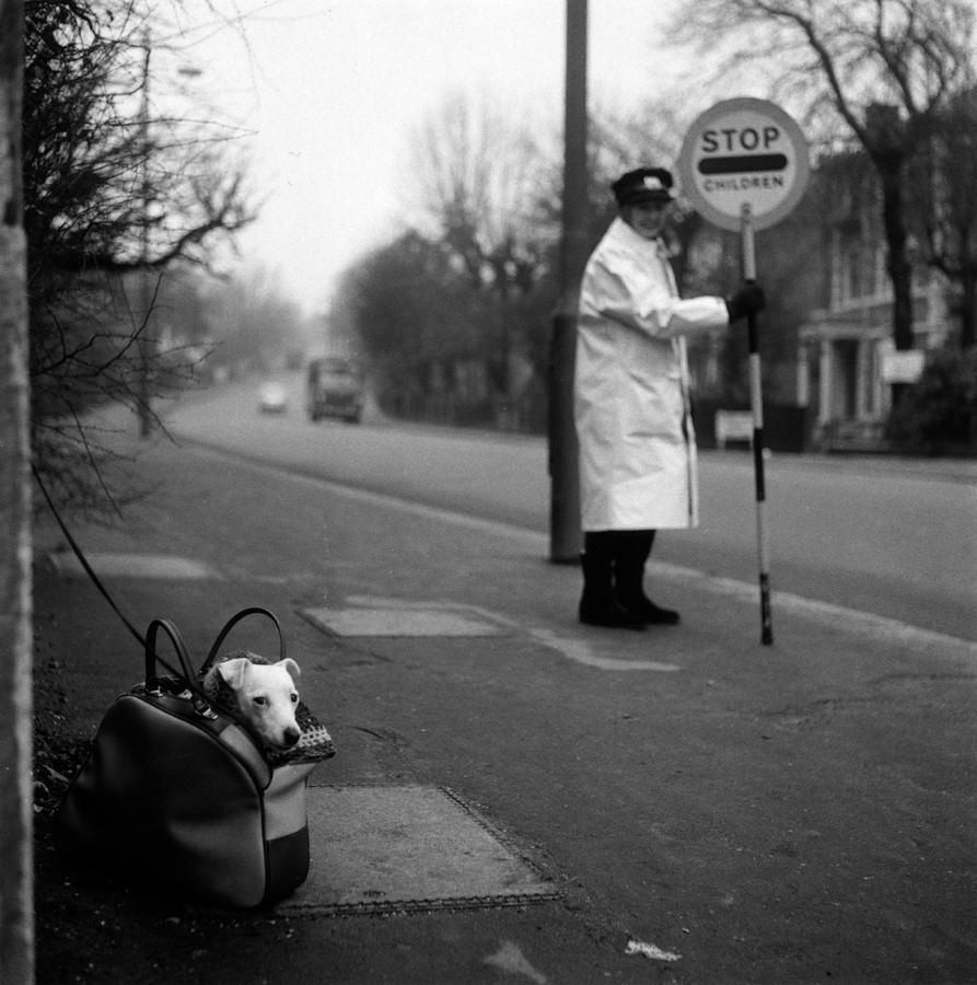 Adults Only Photograph - Bag Dog by Jim Witts