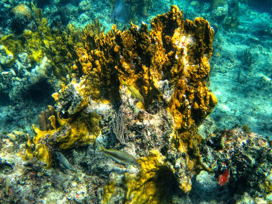Coral Reef Photograph - Bahamas 049 by Lance Vaughn