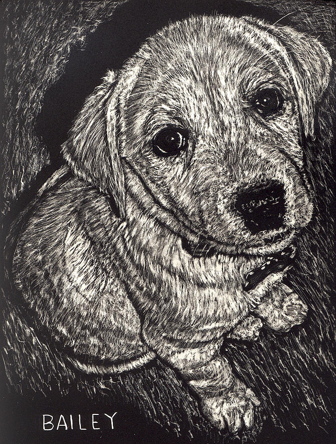 Puppy Drawing - Bailey The Puppy by Robert Goudreau