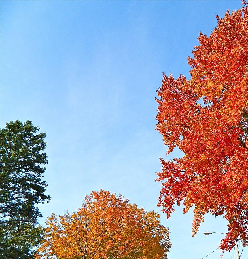 Foliage Photograph - Balance Of Beauty by Randy Rosenberger