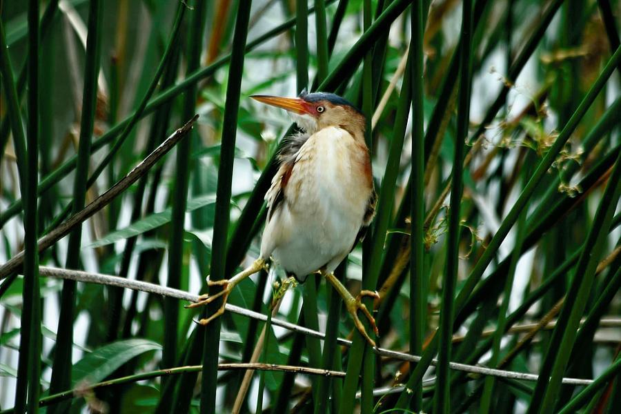 Bird Photograph - Balancing Act by Larry Parker