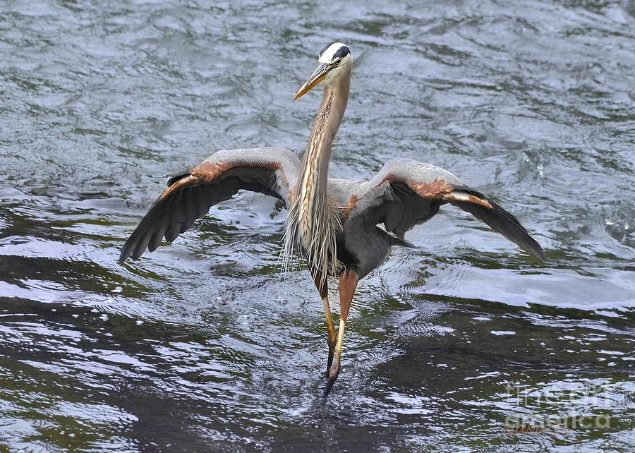 Crane Photograph - Balancing Act by Nava Thompson