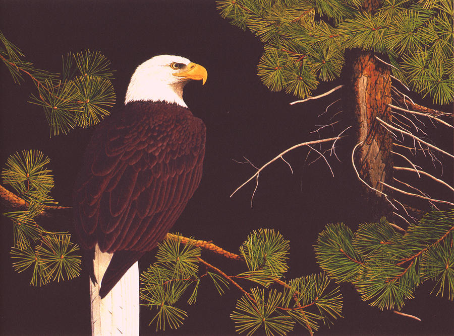 Bald Eagle Drawing - Bald Eagle by Bill Gehring