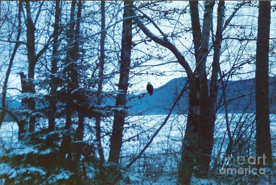 Bald Eagle Photograph - Bald Eagle Haines Alaska by Judyann Matthews