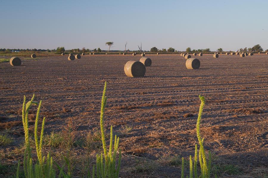 Peanut Photograph - Bales In Peanut Field 12 by Douglas Barnett