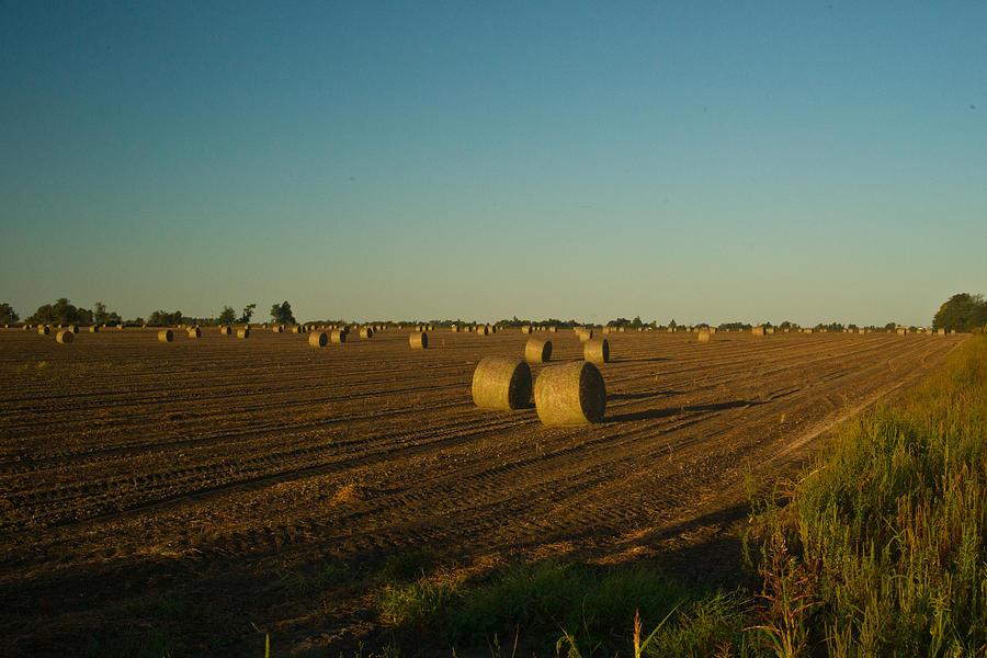 Peanut Photograph - Bales In Peanut Field 13 by Douglas Barnett