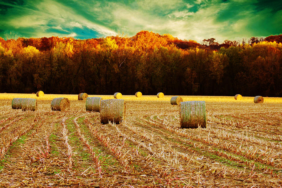 Hay Photograph - Bales Of Autumn by Bill Tiepelman
