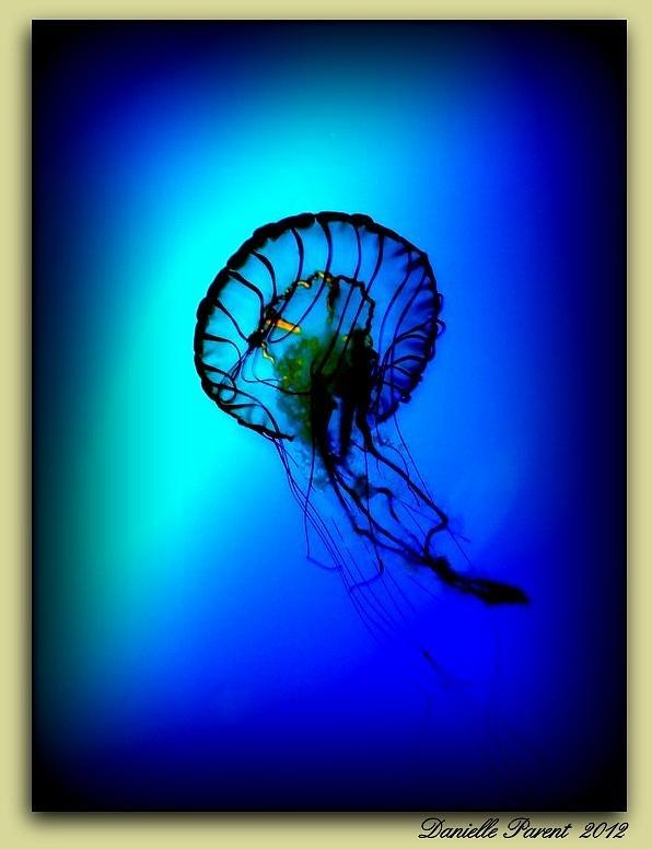Ocean Life Photographs Photograph - Baltimore Belle  by Danielle  Parent