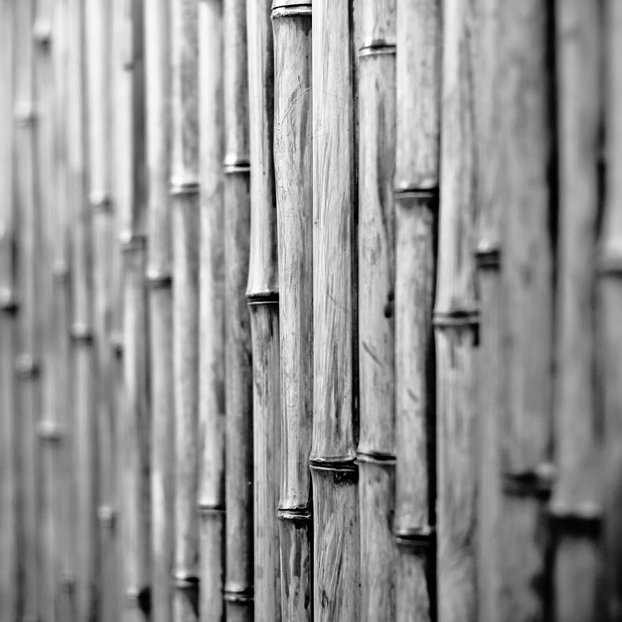 Square Photograph - Bamboo Fence by George Imrie Photography
