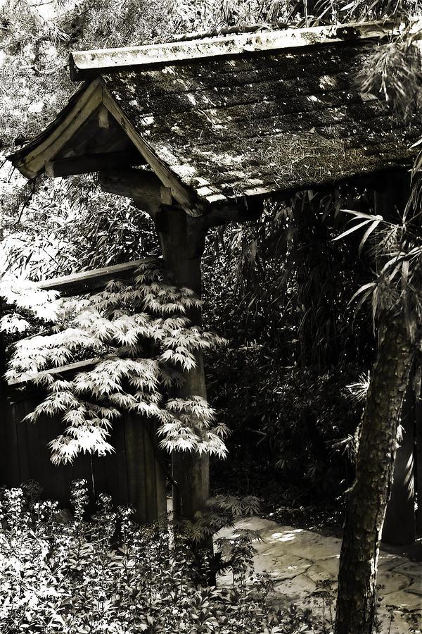 Photo Photograph - Bamboo Garden -2 by Alan Hausenflock