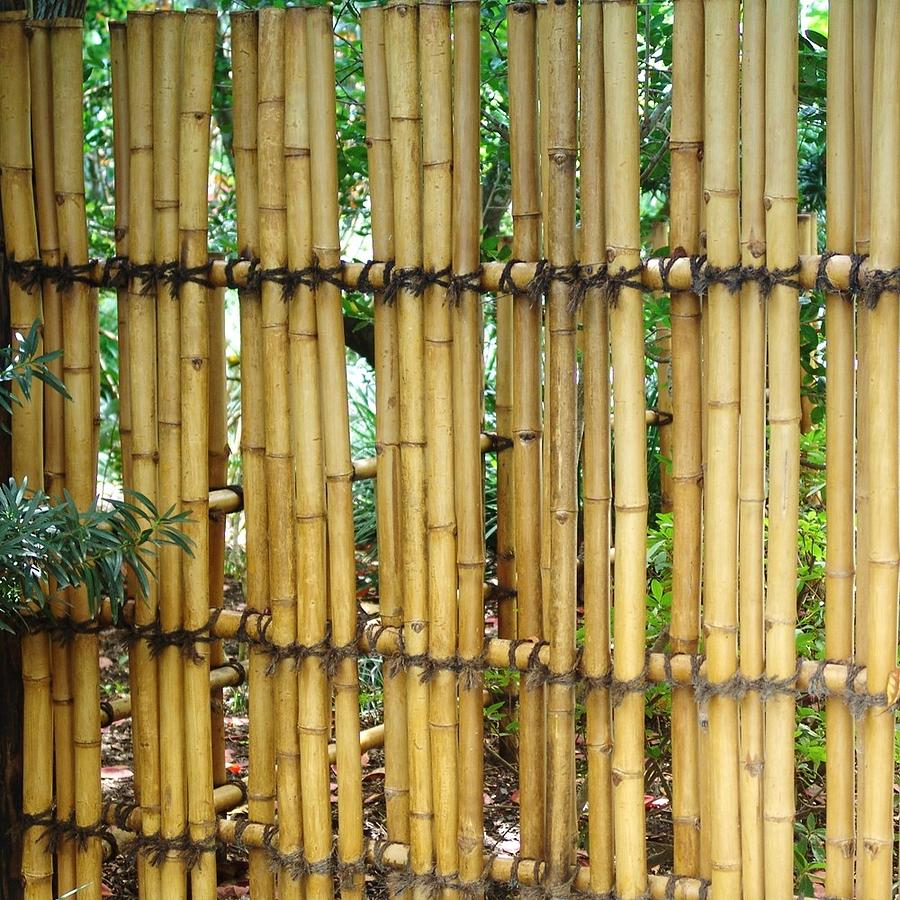 Bamboo Gate Photograph By Florene Welebny