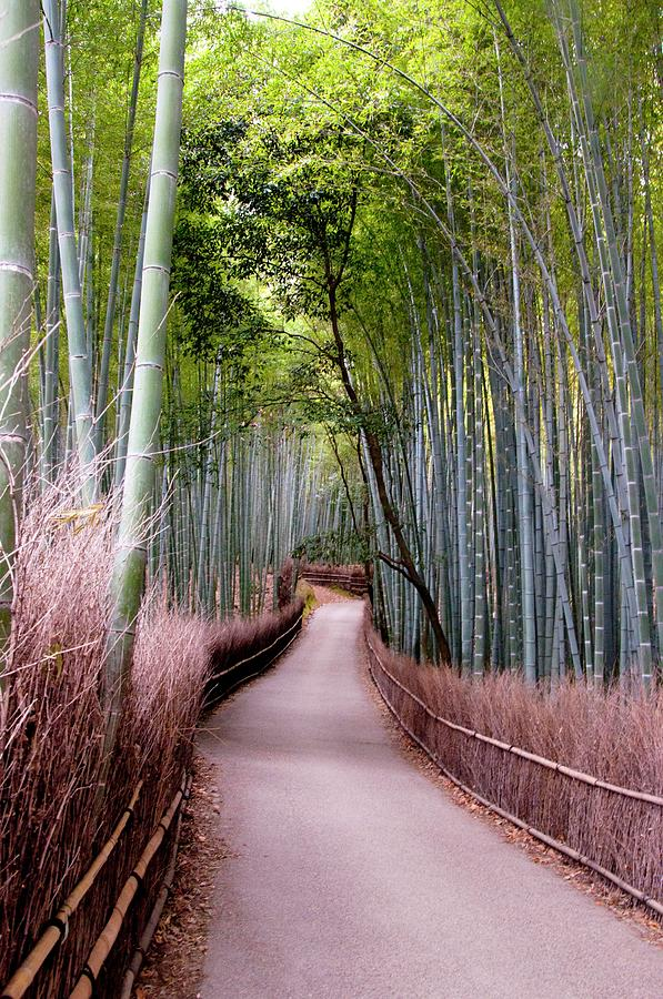Vertical Photograph - Bamboo Grove by Shadie Chahine