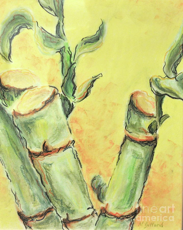 Nature Drawing - Bamboo by Norma Gafford