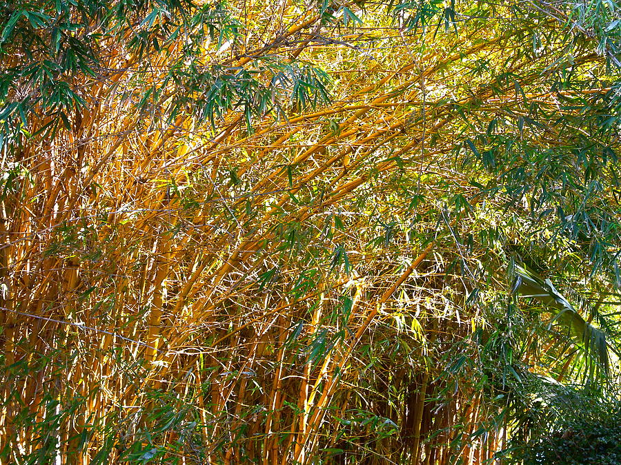 Nature. Bamboo. Trees. Yellow. Green. Leaves. Outdoors. Landscape. Forest. Texture.  Photograph - Bamboo Stand Please Buy Me by Michael Clarke JP