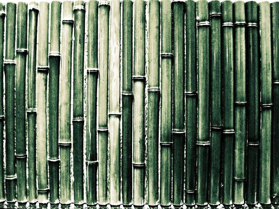 Horizontal Photograph   Bamboo Wall By M.taka
