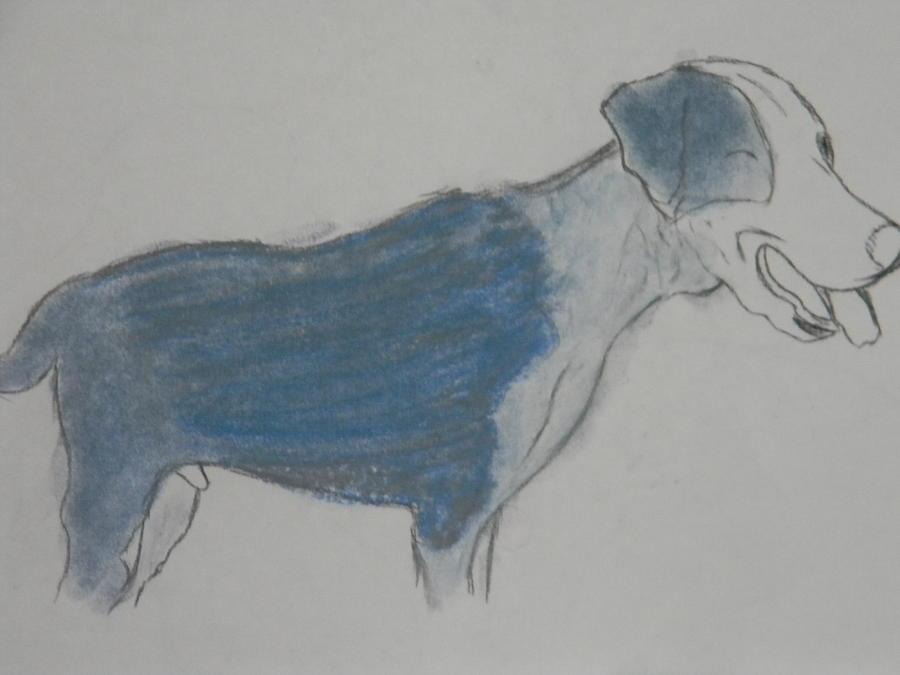Dog Drawing - Bandit by Mahalaleel Muhammed-Clinton