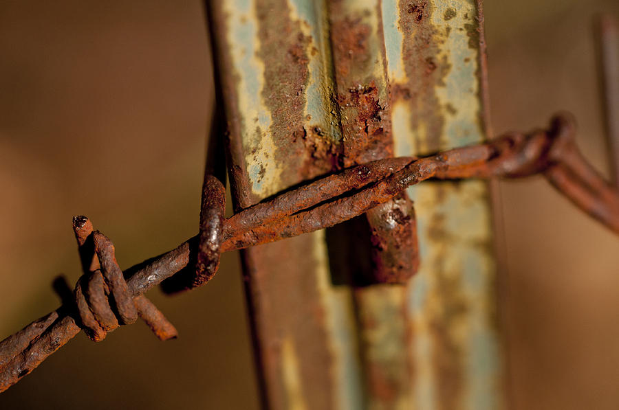 Barbed Wire And Rusty Fence Post Photograph By Wilma Birdwell