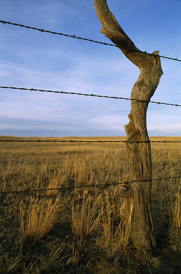 Color Image Photograph - Barbed Wire Fence Along Dry Creek Road by Gordon Wiltsie