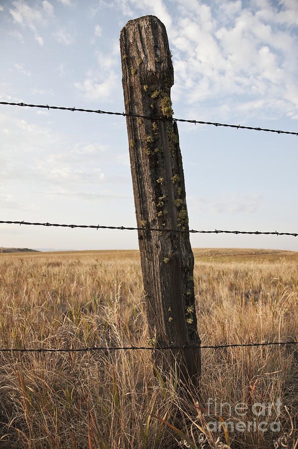 Autumn Photograph - Barbed Wire Fencing And Wooden Post by Jetta Productions, Inc