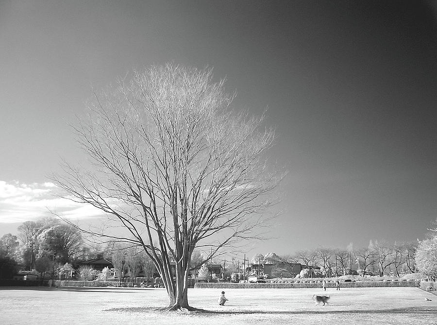 Horizontal Photograph - Bare Frozen Tree In Winter by Yaplan