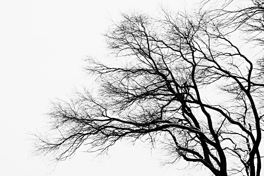Nature Photograph - Bare Tree Silhouette by Larry Ricker