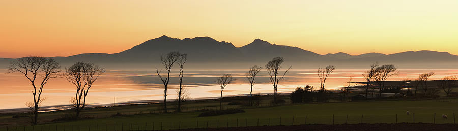 Horizontal Photograph - Bare Trees At Coast by Image by Peter Ribbeck
