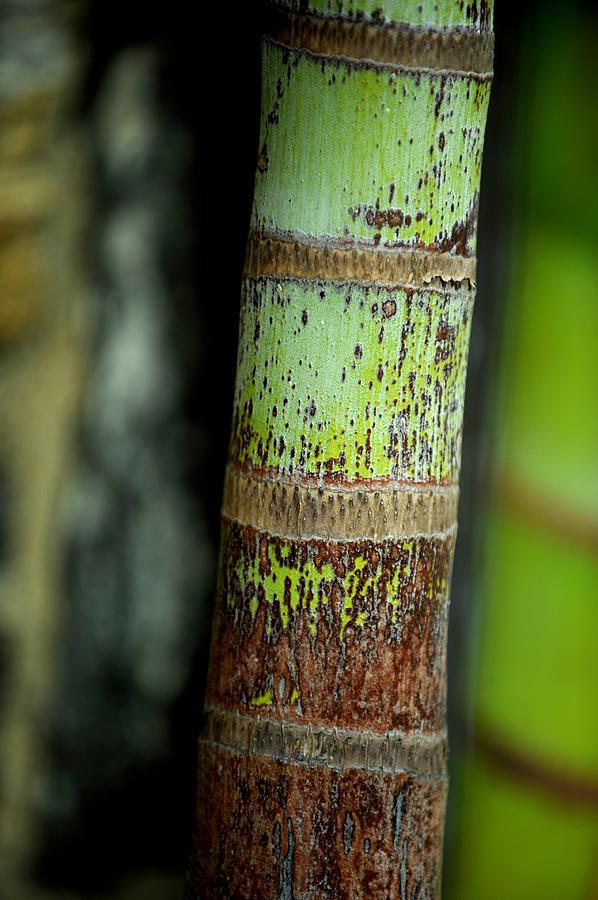 Tree Photograph - Bark by Frank DiGiovanni