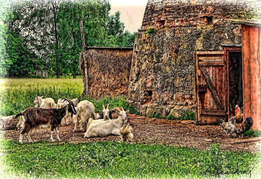 Barn And Farm Animals Photograph By Alexandra Jordankova