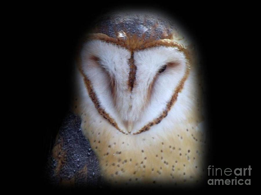 Barn Owl Photograph - Barn Owl by Donna Parlow