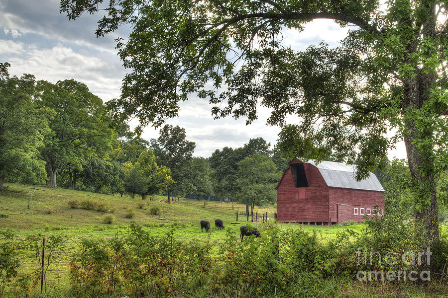 2012 Photograph - Barn With Grazing Cows by Larry Braun