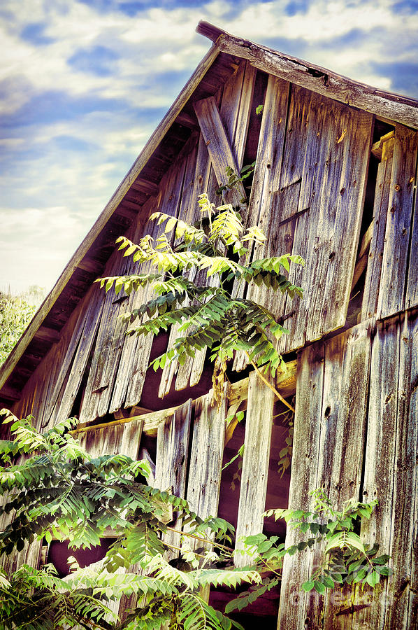 Barn Photograph - Barn With Tree by HD Connelly