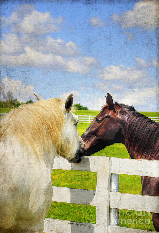 Animal Photograph - Barn Yard Kisses by Darren Fisher