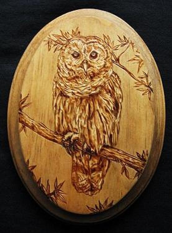 Barred Owl Pyrography By Bob Renaud