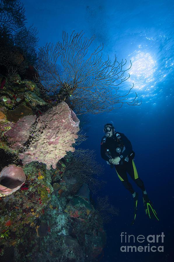 Diver Photograph - Barrel Sponge And Diver, Belize by Todd Winner
