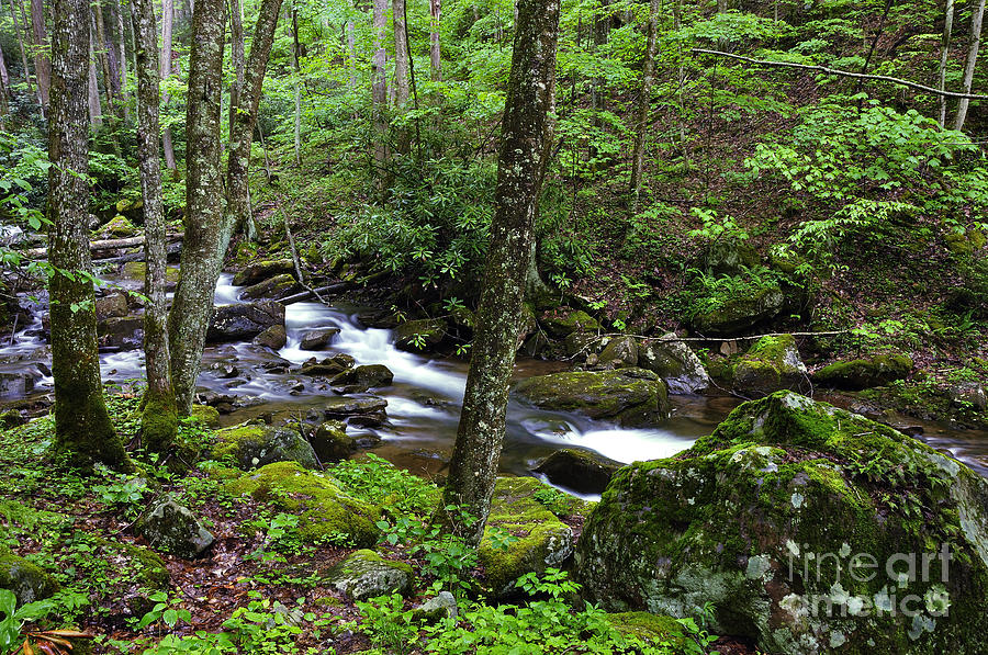 Stream Photograph - Barrenshe Run by Thomas R Fletcher