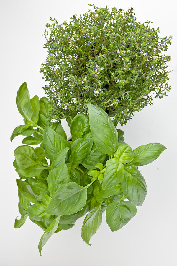 Aromatic Herbs Photograph - Basil And Thyme by Joana Kruse