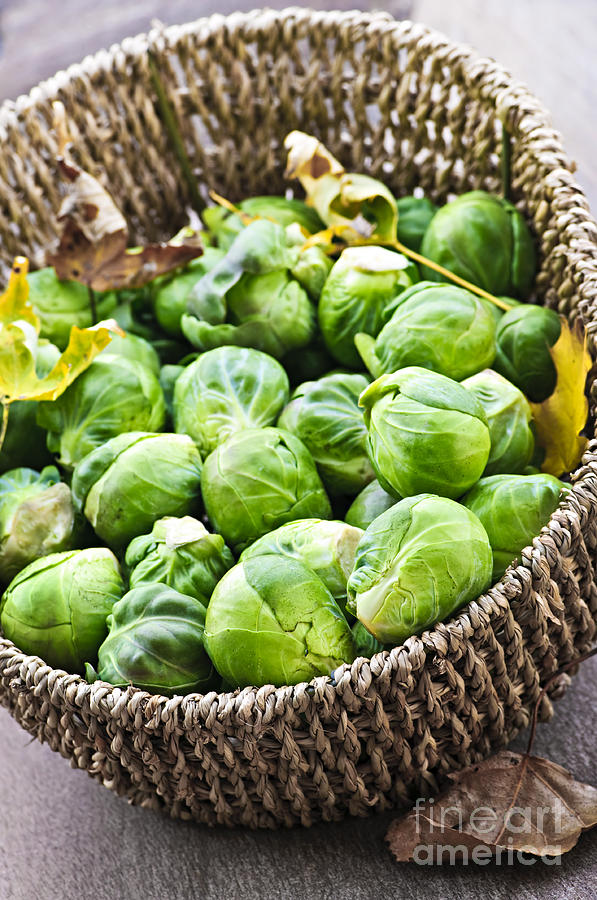 Brussels Sprouts Photograph - Basket Of Brussels Sprouts by Elena Elisseeva