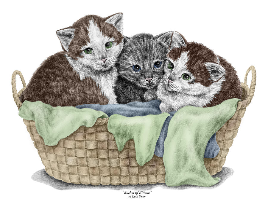 Basket of Kittens - Cats Art Print color tinted by Kelli Swan