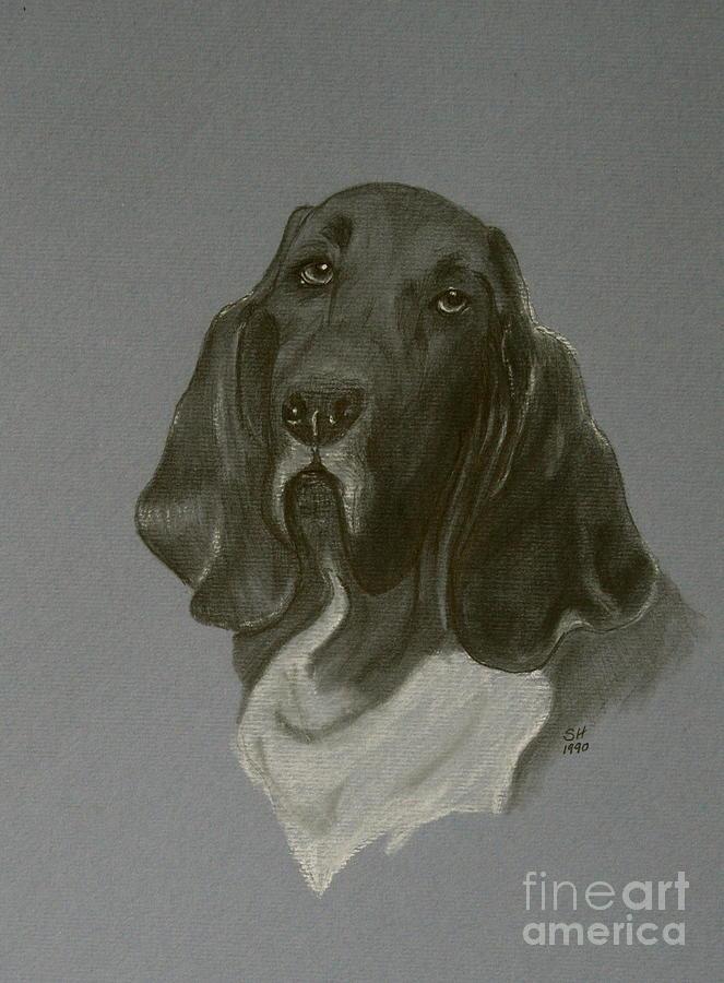 Basset Drawing - Basset Hound by Susan Herber