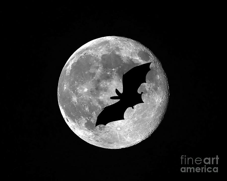 Moon Photograph - Bat Moon by Al Powell Photography USA